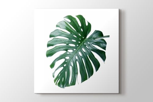 Monstera görseli.