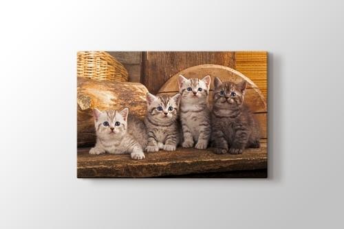 Yavru Kediler görseli.