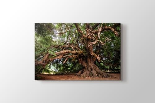 Big Tree görseli.