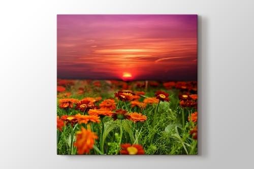 Günbatımı Çiçek Tarlası görseli.
