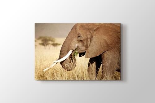 Elephant Eating görseli.