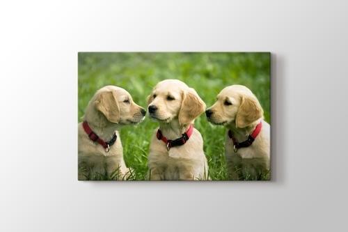 Three Dogs görseli.