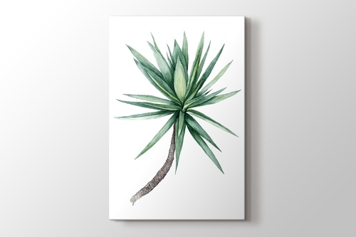 Watercolor Yucca Tree görseli.