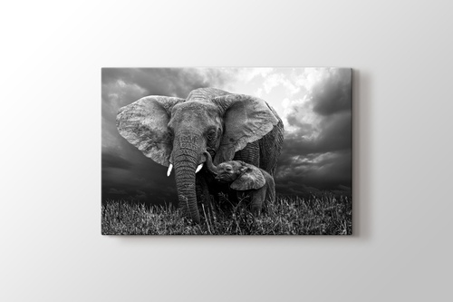 Elephants görseli.