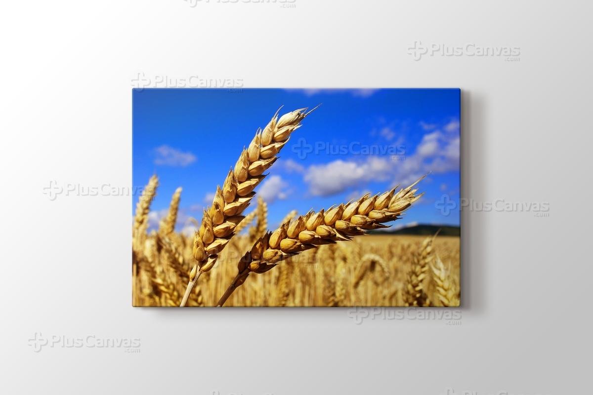 Buğday Kanvas Tablo Burada Pluscanvas