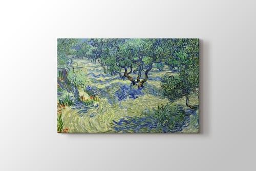 Olive Orchard görseli.