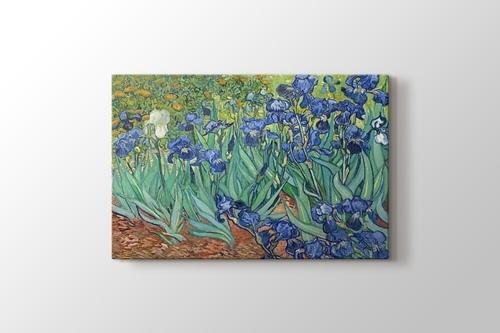 Irises görseli.