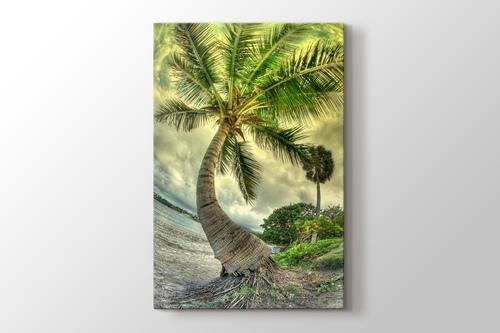 Palm on the Beach görseli.