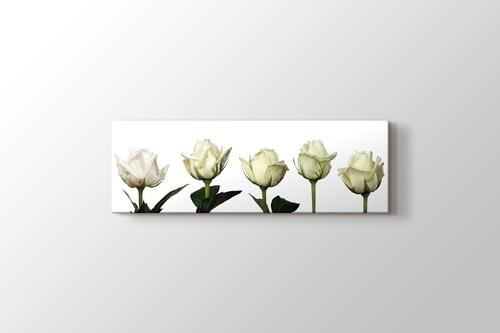 Beyaz Güller görseli.