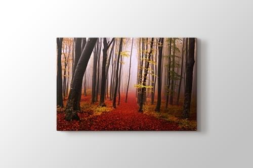 Sonbaharda orman patikası görseli.