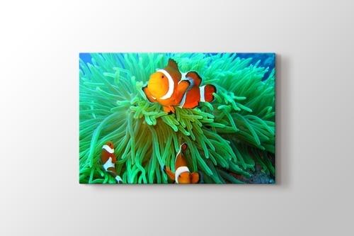 Clownfish Family görseli.