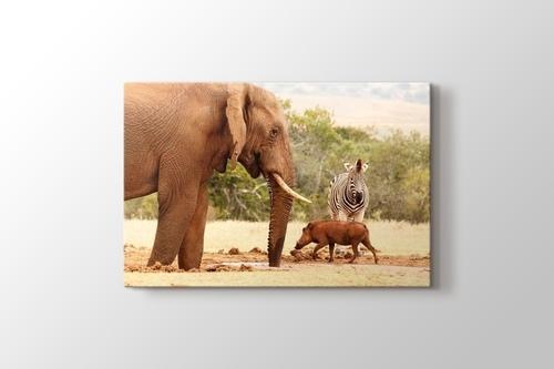 African Elephants görseli.