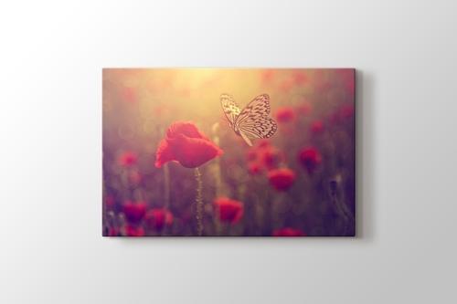 Poppy and Butterfly görseli.