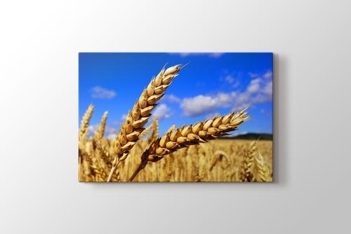 Buğday görseli.