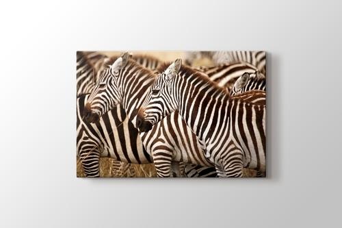 Zebras görseli.