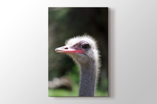 Ostrich görseli.