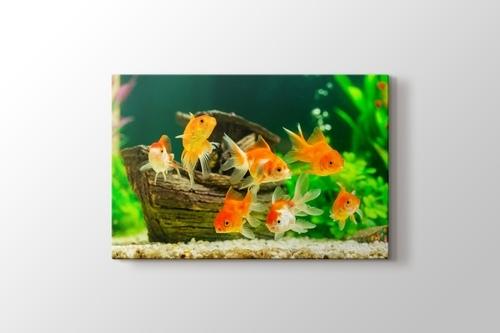 Goldfish görseli.
