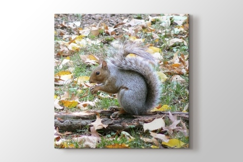 Squirrel at Central Park New York görseli.