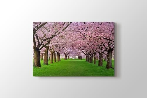 Cercis Trees görseli.