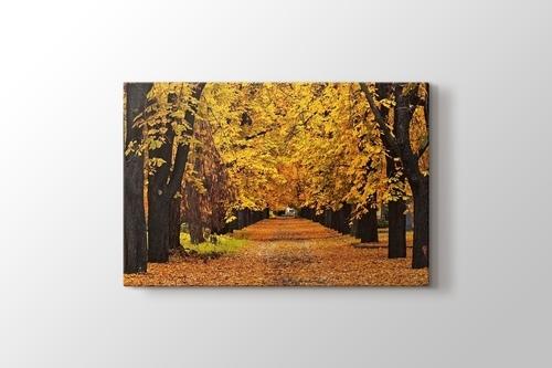 Autumn Colors görseli.