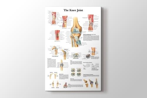 Knee Joint Chart görseli.