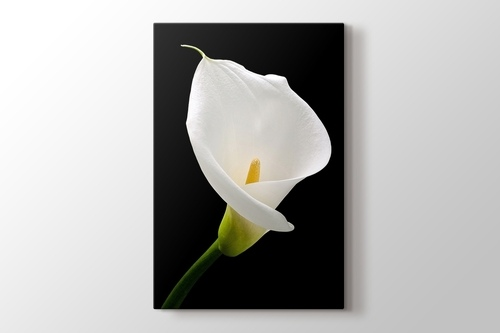 White Lillies görseli.