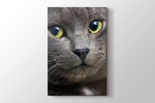 Black Pussy Cat görseli.