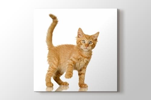 Tawny Cat görseli.
