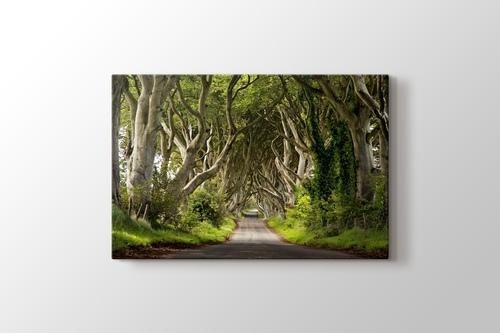Orman Yolu görseli.
