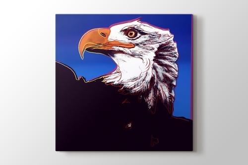 Bald Eagle görseli.