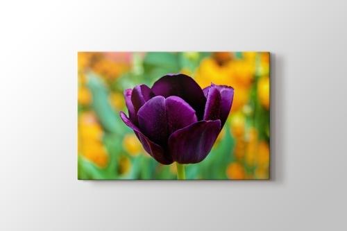 Purple Tulip görseli.