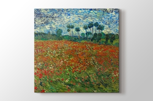 Poppy Field görseli.