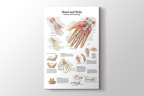 Hand and Wrist Chart Anatomy and Pathology görseli.