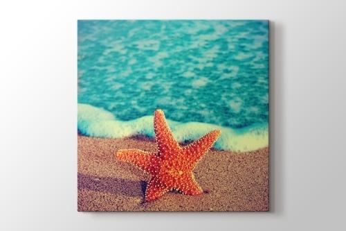 Deniz Yıldızı görseli.