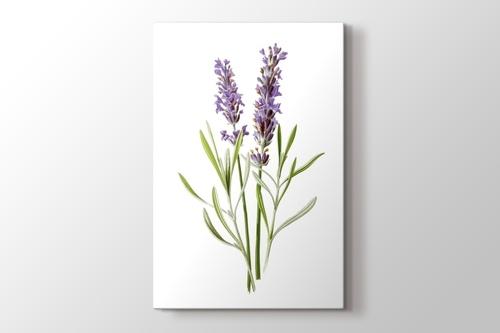 Lavender görseli.