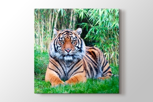 The Sumatran Tiger görseli.
