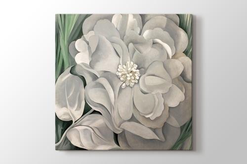 White Calico Flower görseli.