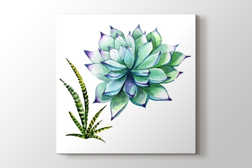 Succulentus Wildflower görseli.