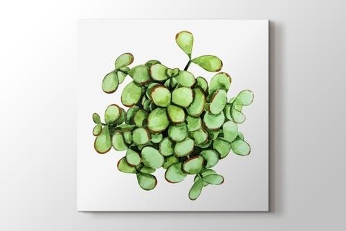 Cell Succulent görseli.