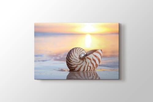 Deniz Kıyısında Deniz Kabuğu görseli.