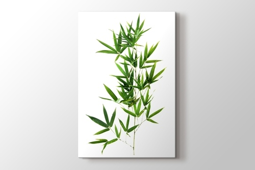 Bamboo Leaves görseli.