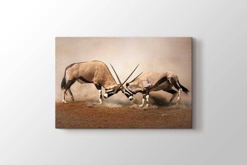 Antilop görseli.