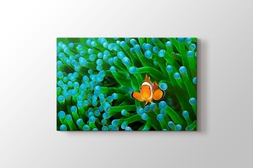 Clownfish görseli.