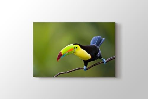 Keel Billed Toucan Central America görseli.