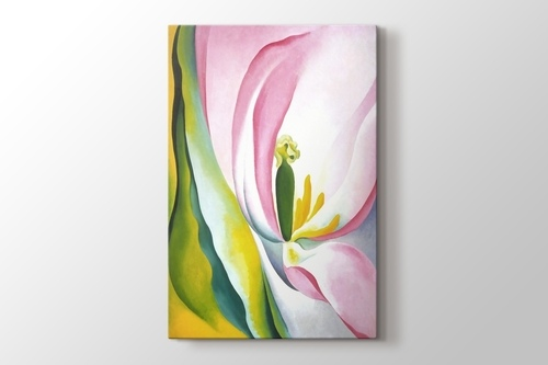 Pink Tulip görseli.