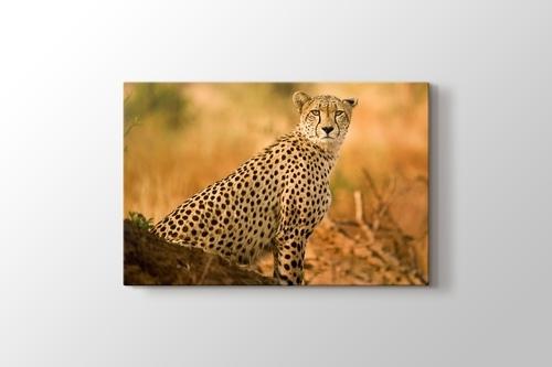 Cheetah görseli.
