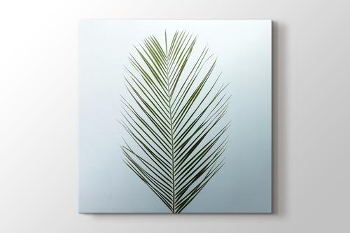 Palm Leaf görseli.