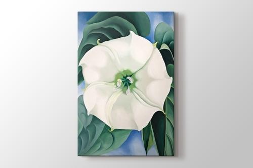 White Flower No1 görseli.