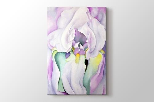 White Iris görseli.