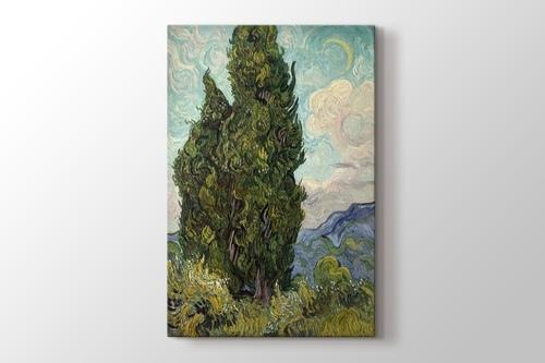 Cypresses görseli.